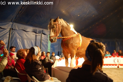 Maailman Isoin Hevonen